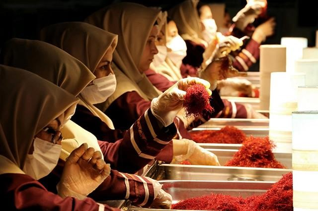 Preparin Saffron for Export
